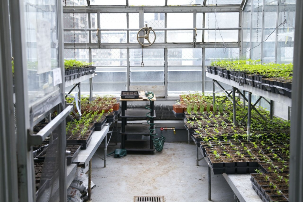 Greenhouse images