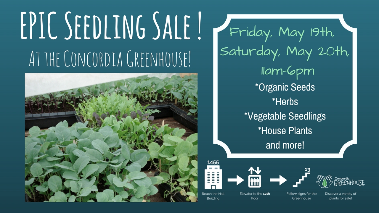 City Farm School – Epic Seedling Sale!